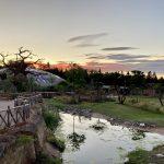 Übernachtung in der Lewa Savanne Zoo Züri